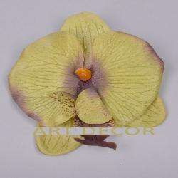 головка орхидеи мал. темно зеленая