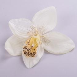 головка орхидеи белая