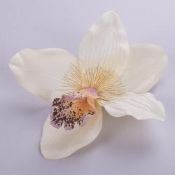 головка орхидеи персиковая