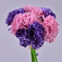 Букет гвоздики вязкой фиолетово-розовый