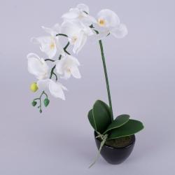 орхидея в кашпо латексная двойная