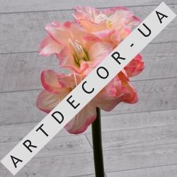 Амариллис гигант (розовый)
