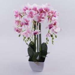 орхидея латексная в кашпо гигант (бело-розовая )