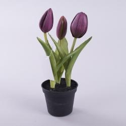 тюльпан латексный в горшке фиолетовый