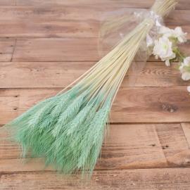 натуральная пшеница голубая