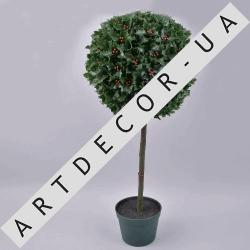 дерево штамбовое падуба - 63см