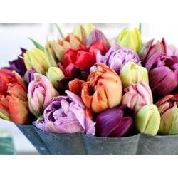 Головки весенних цветов<br>